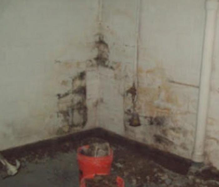New Bedford, MA Mold Removal And Mold Remediation