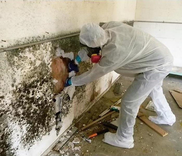 Mold Remediation Ways to help prevent Mold growth- Seekonk, MA 02771