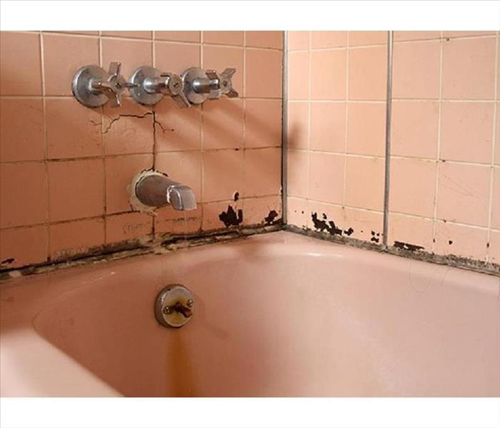 Mold Remediation How Often Should you Clean your Bathroom to avoid Mold Growth?